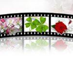 中国ドラマ「択天記」の紹介と主役ロハン,グリナジャのプロフィール、それぞれの彼女、彼氏は?